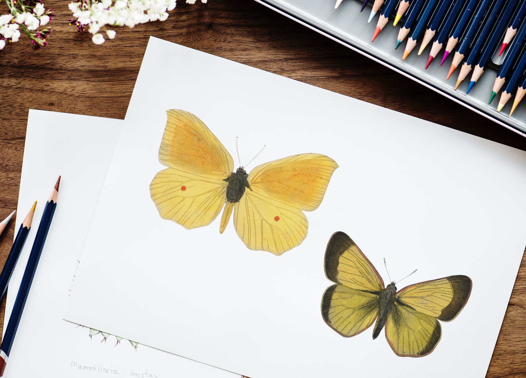 15 drawing ideas that anyone can try image 13